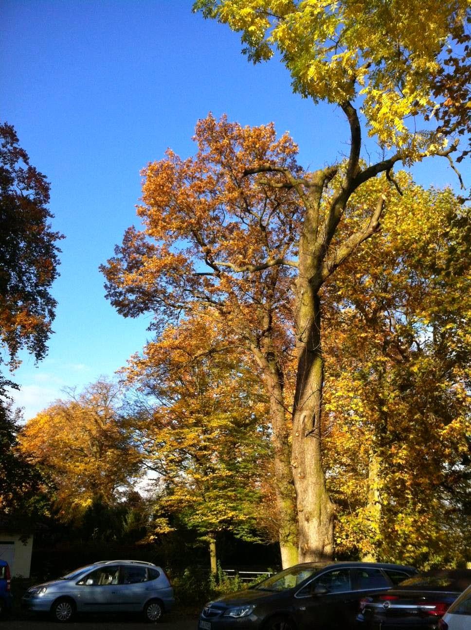 Wochenende in Bildern 8./9. November 2014